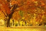 nature automne.jpeg