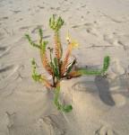 fleur-de-sables.jpg