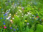 simplicite-fleurs___r_155223-1a0c265.jpg