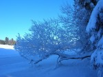 beauté hivernale.jpg