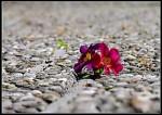 fleur_desert.jpg