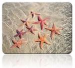 2017-06-29-étoiles-de-mer.jpg