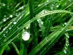 pluie d'été.jpg