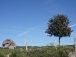 Compstl rocher arbre.jpg