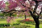 printemps-louvre-292923.jpg