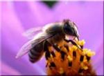 2015-09-17-abeille.jpg